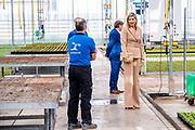 Koningin Maxima tijdens een werkbezoek aan kwekerij Zuidbaak in Honselersdijk. Het bezoek vond plaats in het kader van de uitbraak van het coronavirus (COVID-19). De vraag naar producten uit de sierteeltsector is sinds de uitbraak van het virus bijna helemaal weggevallen<br /> <br /> Queen Maxima made a working visit to the Zuidbaak nursery in Honselersdijk. The visit took place in the context of the coronavirus outbreak (COVID-19). The demand for products from the horticultural sector has almost completely disappeared since the outbreak of the virus