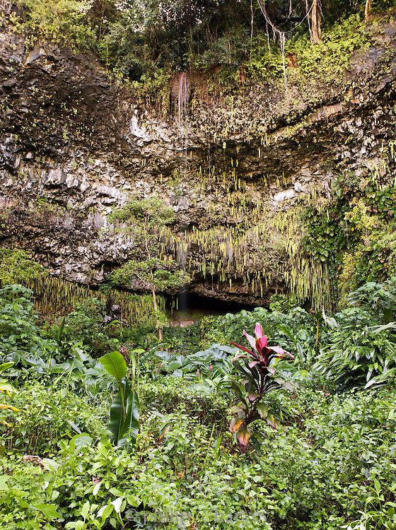 The Fern Grotto on the Wailua River in the Wailua River State Park, Kaua'i, Hawai'i