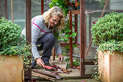 Tidying up a greenhouse before winter. Sweeping up old leaves with a dustpan and brush.
