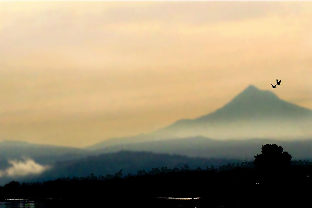 A pair of geese fly by with Mt. Hood in the background as the sun begins to rise.