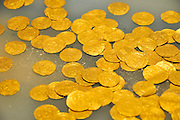 A display of part of the gold coin hoard of gold coins from the Fatimid period (eleventh century CE) in the ancient harbour of Caesarea, Israel