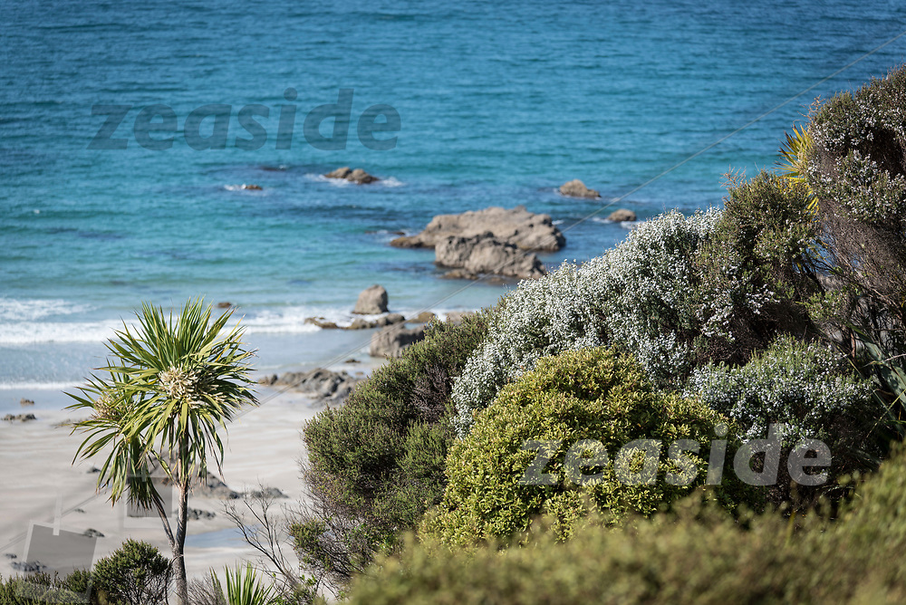 Spring time at Tāwharanui, with Manuka and Cabbage Tree flowering against turquoise waters.