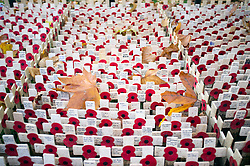 © Licensed to London News Pictures. 05/11/2014. London, UK. Autumn leaves lie amongst wooden crosses planted in the field which opens to the public tomorrow (Thursday 6th November) Every November the annual Field of Remembrance at Westminster Abbey is organised and run by The Poppy Factory. Over 350 plots for regimental and other associations are laid out in the area between Westminster Abbey and St. Margaret's Church. Remembrance crosses are provided so that ex-Service men and women, as well as members of the public, can plant a cross in memory of their fallen comrades and loved ones.<br /> . Photo credit : Stephen Simpson/LNP