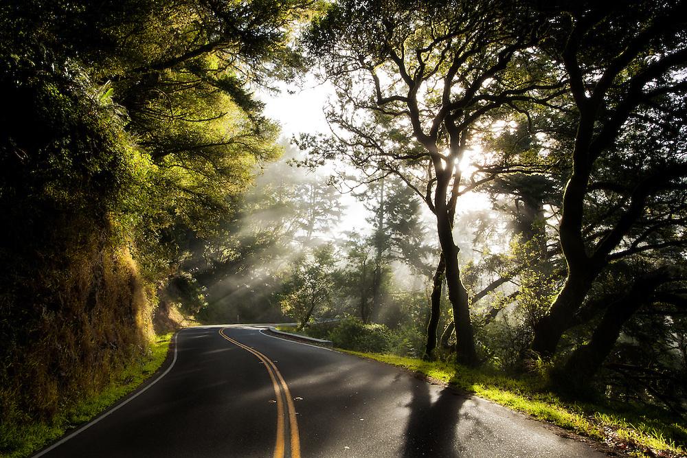 Eearly morning sun streams through the primeval forest along a windy road atop mt. Tamalpais in Northern California near San Francisco.