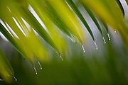 Parauapebas_PA, Brasil...Vegetacao da floresta Nacional dos Carajas, Para. Na foto detalhe de uma folha...Carajas National Forest Vegetation, Para. In the photo, detail of a leaf...Foto: JOAO MARCOS ROSA / NITRO..Foto: JOAO MARCOS ROSA / NITRO