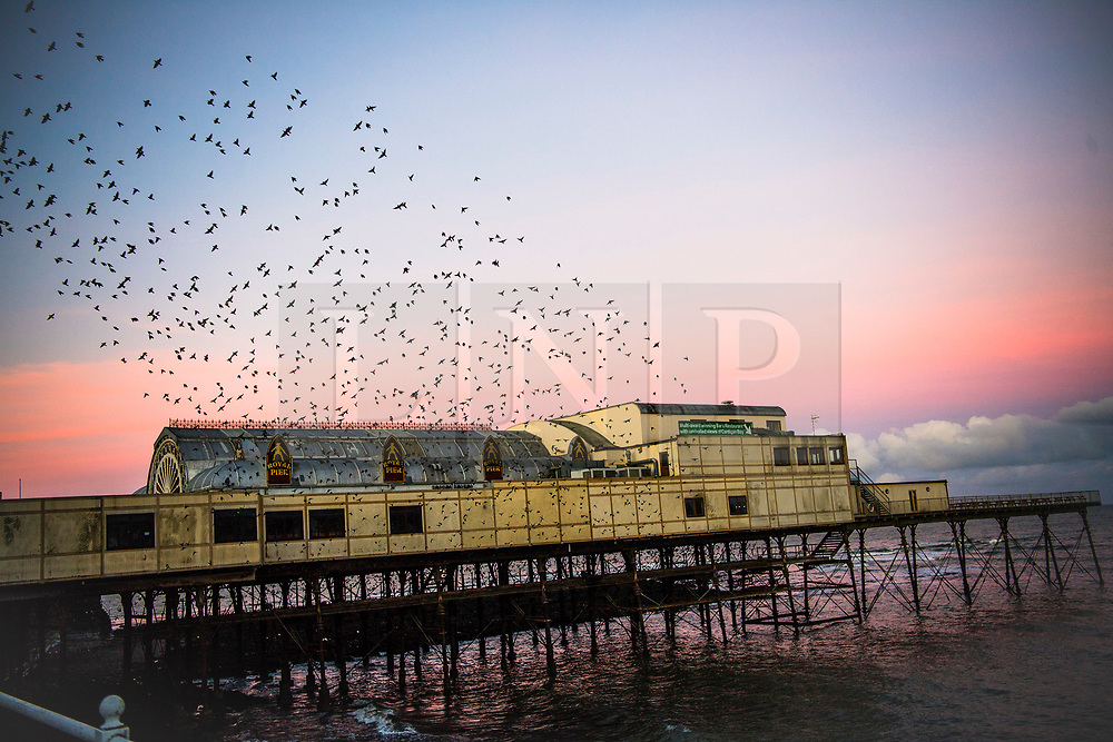© Licensed to London News Pictures. 01/12/2017. Aberystwyth, UK. On a  bright and frosty first day of December, clouds of thousands of  starlings fly out over the rooftops as they leave their overnight roost under the seaside pier at Aberystwyth .Photo credit: Keith Morris/LNP