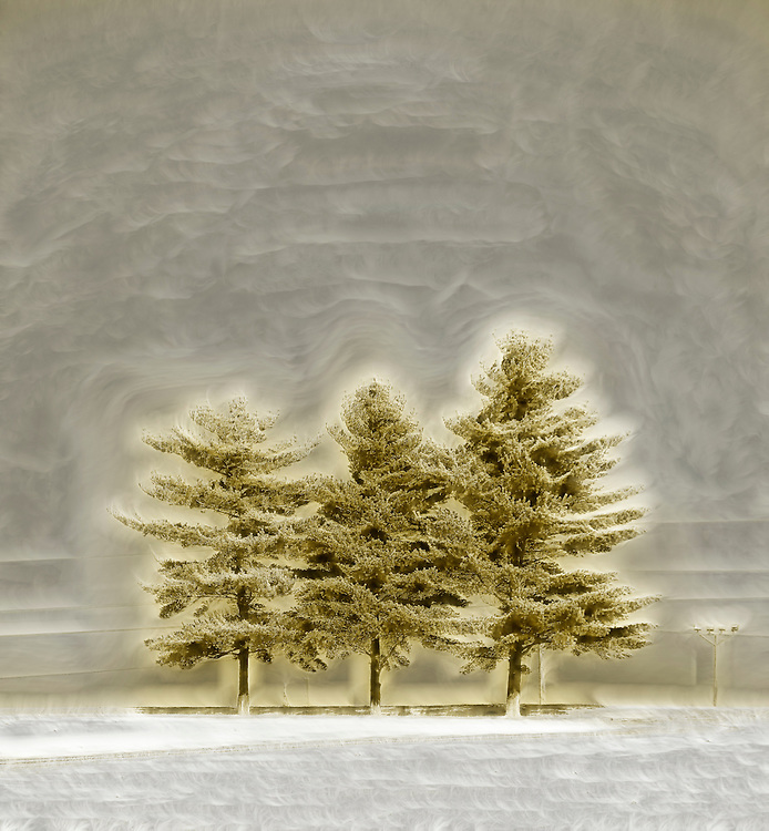 Three blissful trees sit in a resplendent golden light against a backdrop of pearly white promise