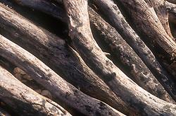 Pile of logs,