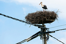 Stork on electricity pole during 1st Stage of 25th Tour de Slovenie 2018 cycling race between Lendava and Murska Sobota (159 km), on June 13, 2018 in  Slovenia. Photo by Vid Ponikvar / Sportida