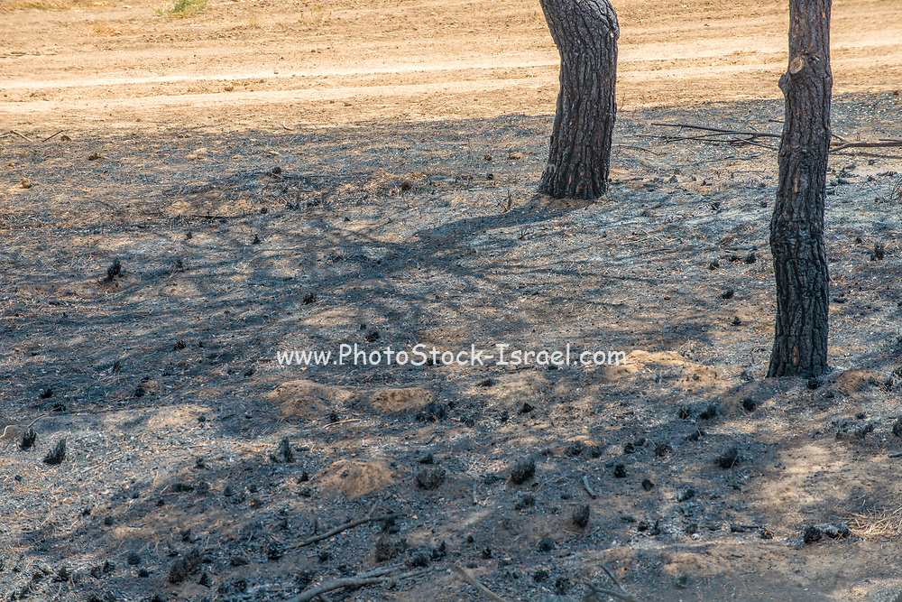 The fire damage caused by Kite bombs that were flown from Gaza with a lit petrol soaked cloth, to set fires to Israeli fields and crops. Photographed on July 16, 2018