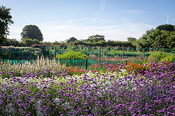 Looking over the stock beds at Green and Gorgeous with Verbena bonariensis in the foreground.