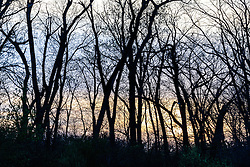 Sunset on trees, Great Trinity Forest, Dallas, Texas, USA