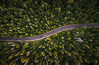 Aerial view of car on empty road in the forest in Estonia.