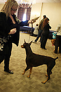 The Doberman at The133rd Westminister Kennel Club Dog Show Press Conference announcing The Dogue De Bordeaux debut at the Westminister Kennel Club Dog Show held at the Pennsylvania Hotel Sky Top Ball Room on February 5, 2009 in New York City