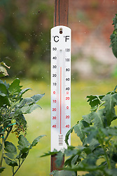 Thermometer hanging inside greenhouse