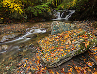 colorful leaves carpet the ground along a stream in the heart of the green mountains, Vermont