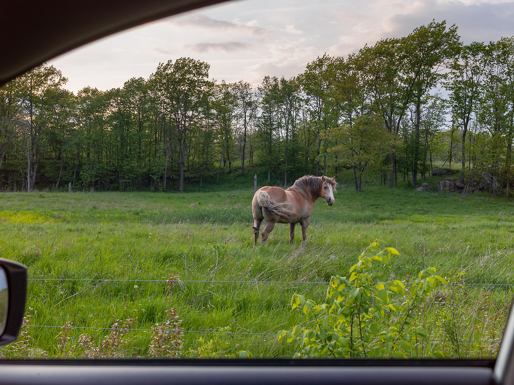 https://Duncan.co/horse-in-a-field
