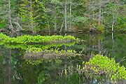 Wetland, Kouchibouguac NAtional Park, New Brunswick, Canada