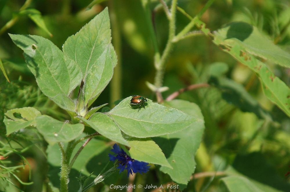 This little beetle was out sunning himself on a beautiful afternoon in the peace garden at Kripalu, Stockbridge, MA