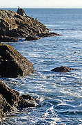 The rocky coast of Maine, with four cormorants perch on a ledge in the distance; Seal Harbor, Maine.