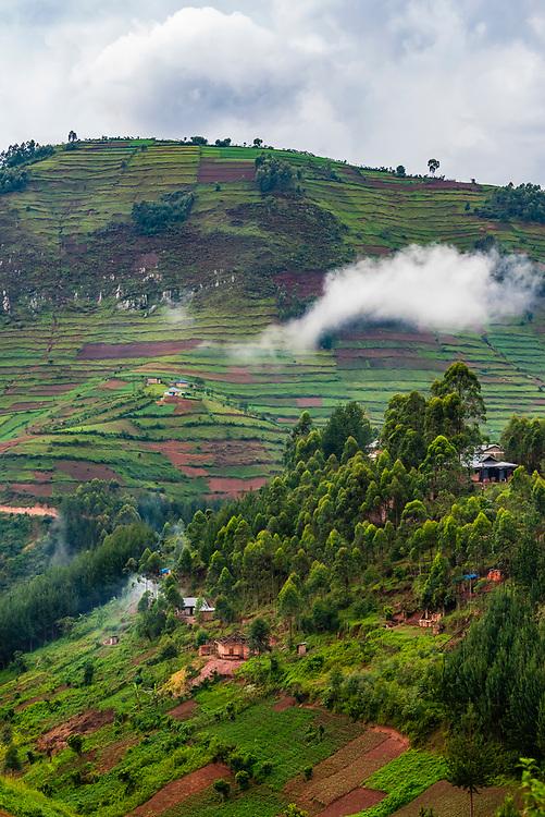 Steep terraced farming, near Bwindi Impenetrable Forest, Uganda.