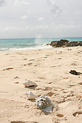 Sea Shells on the beach. Photographed at Grand Turk Caribbean Island