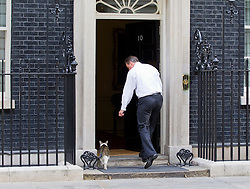 © Licensed to London News Pictures. 16/07/2013. London, UK. As the House of Commons prepares for its summer recess the British Prime Minister, David Cameron, tries, and fails, to attract the attention of Larry, the Downing Street cat, through the door of Number 10. Photo credit: Matt Cetti-Roberts/LNP