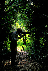 Stock photo of a man bird watching with a spotting scope from a trail in the woods