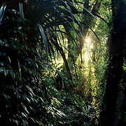 Forest Sunset<br /> New England NP<br /> NSW