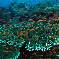 Fiji Coral Reefs