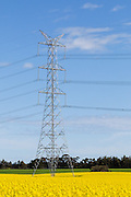 Power line transmission tower in field of flowering canola crop in rural country Victoria, Australia <br /> <br /> Editions:- Open Edition Print / Stock Image