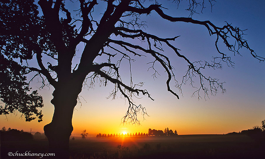 Tree silhouettes the sunset in the Willlamette Valley near Stayton Oregon