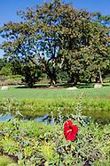 Overall Views - Water Garden