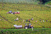 Bourgogne Beaujolais Cru Villages - stock photo samples