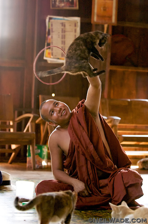 Inle Lake, Burma (Myanmar)  Monks train cats in this remote Burmese monastery to jump through hoops for tourists.