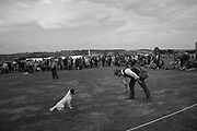 Gun dog demonstration, Rye and District County Show, Icklesham. 17 August 2019