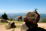 Horse grazing at the peak of Nui Langbiang (Langbiang Mountain), with ornately feathered hat on boulder. Da Lat, Vietnam