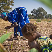 Collecting the peanuts that got away during harvesting from the fields of Koumbadiouma in Kolda, Senegal.