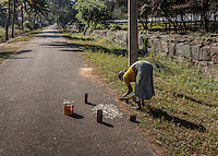 An elderly Indian woman dries fish on the road in Kerala.