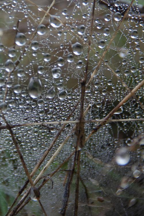 Dew on Spiderweb, Prevost Island, Gulf Islands National Park Preserve, British Columbia, Canada