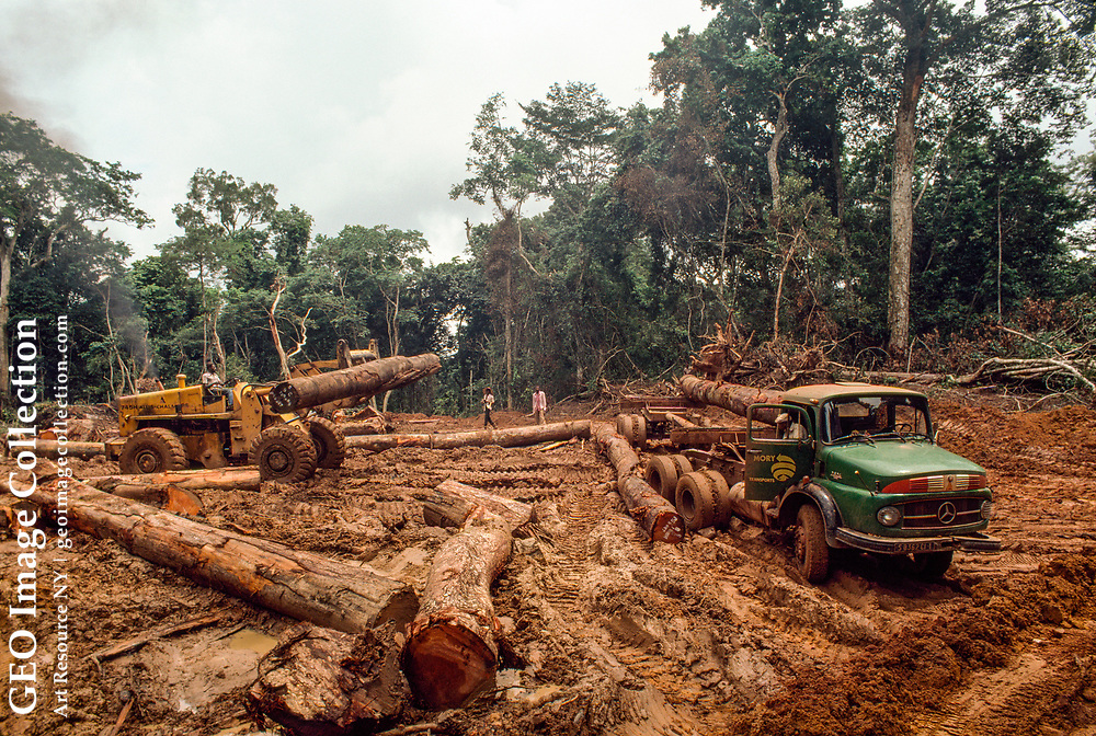 Illegal logging operations in the Tai Forest of Ivory Coast.