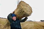 Nederland, Belt-Schutsloot, 25-3-2008Rietsnijder Wout van de Belt in de Wieden met een schone bundel riet , die later gebonden worden in bundels van 55cm omtrek voor de rietdekker.Foto: Flip Franssen/Hollandse Hoogte
