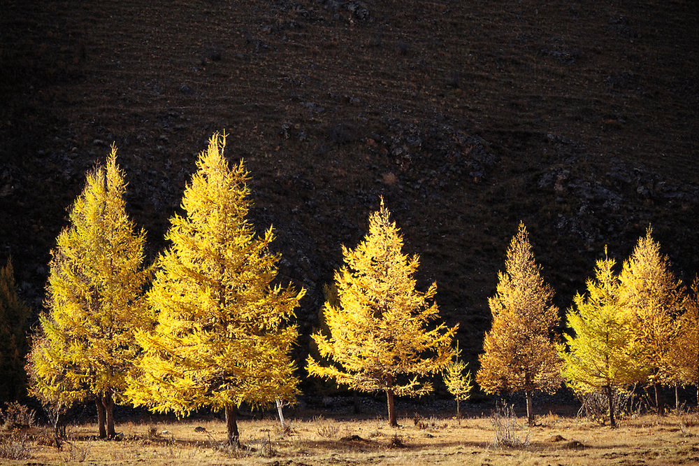 Trees along a stream, 35km from Ulaanbaatar, Mongolia. Material World Project.
