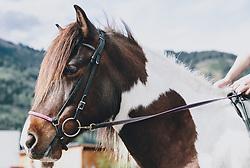 THEMENBILD - ein aufgezäumtes, geflecktes Pferd (Isländer), aufgenommen am 01. Mai 2020 in Kaprun, Oesterreich // a bridled, spotted horse (Icelander) in Kaprun, Austria on 2020/05/01, Kaprun, Austria. EXPA Pictures © 2020, PhotoCredit: EXPA/ Stefanie Oberhauser