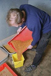 Man emptying tray of maggots into plastic container,