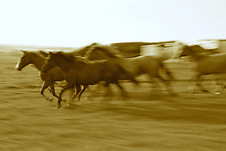 Cavalos crioulos nos campos de Bagé. FOTO: Eduardo Rocha / Preview.com