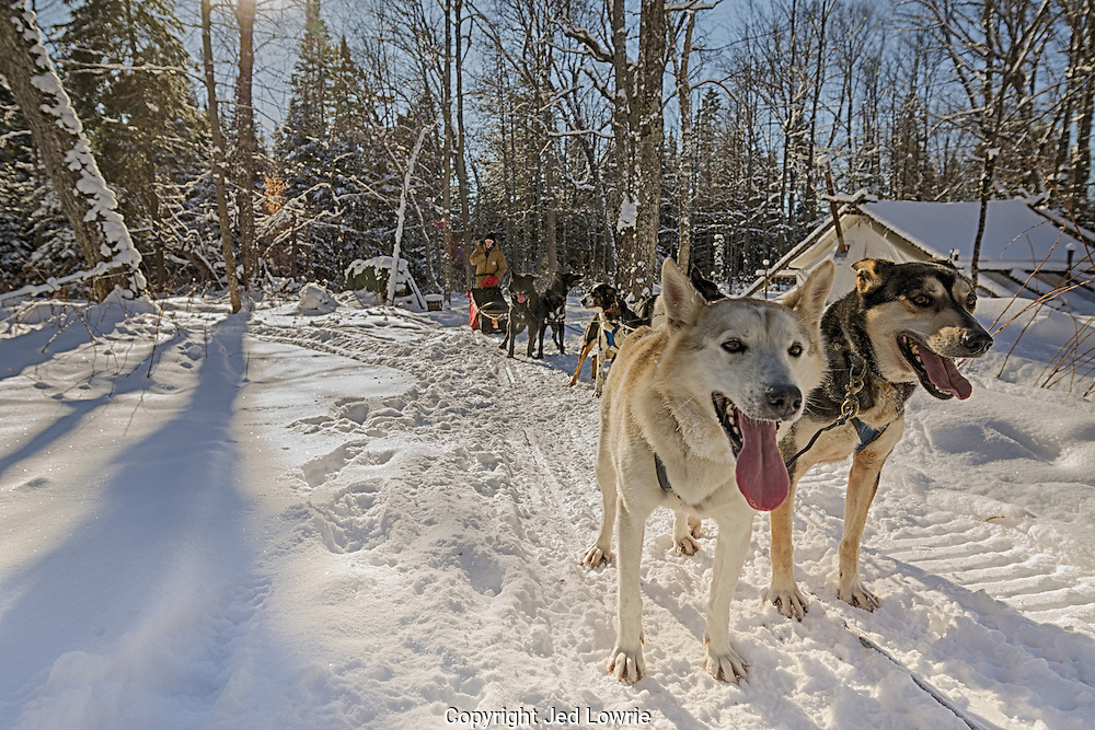 One of the best Christmas gifts I've received yet. A chance to take a team of dogs out for the day. Their roles are clearly defined by their position on the gangline. These leaders lived up to their roles.