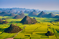 Chine, Province du Yunnan, Luoping, champs de Colza en fleur // China, Yunnan, Luoping, Fields of rapeseed flowers in bloom