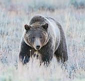 Grand Teton & Yellowstone National Park