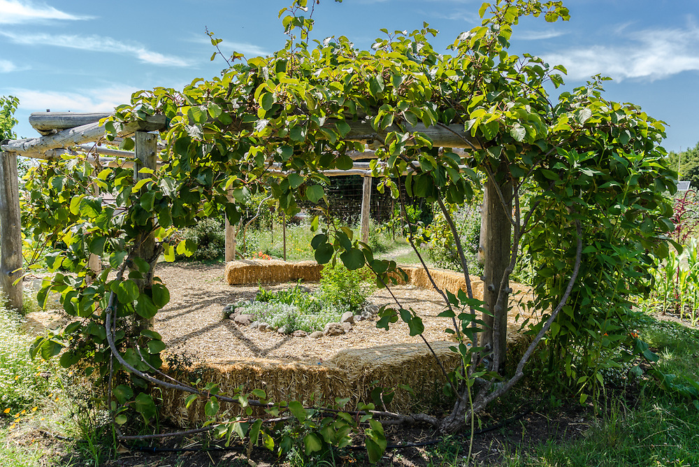 Alice Waters created the edible schoolyard project at a nearby middle school